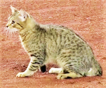 Never got his name but this Kittie put on some amazing moves as Yankee Stadium security and ground crew attempted to catch him, but couldn't grab him August 1 during the Yankee-Baltimore game.