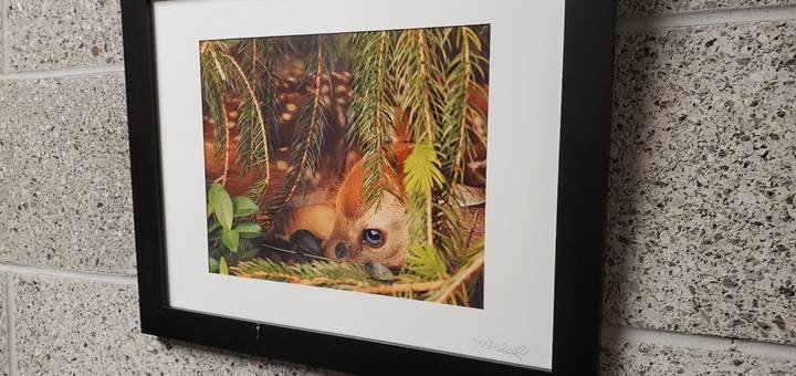 This picture of a fawn, taken by local photographer Martha Tully, hangs in one of the Government Center's hallways in Monticello.