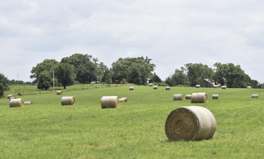 Livestock markets logo