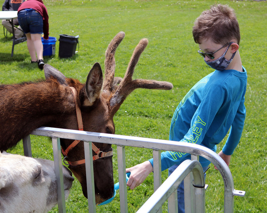 Sedalia Middle School student Caleb Nerad creates a little space as he reluctantly feeds a bull elk as part of the Zoo Day event Monday, April 26, at Sedalia Middle School.