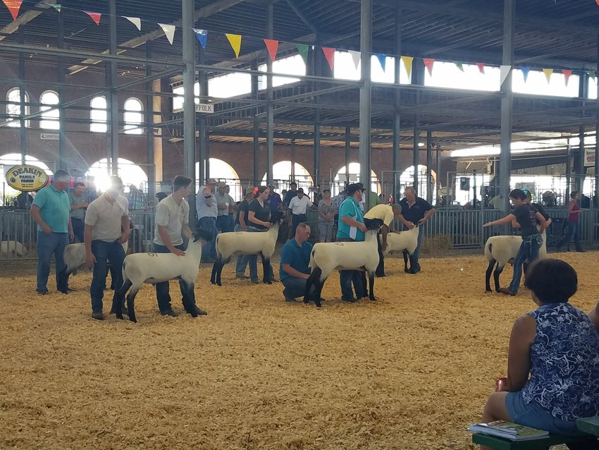 People gather at the Missouri State Fairgrounds for the Midwest Stud Ram Show and Sale being hosted this week. According to Sedalia Convention and Visitors Bureau Executive Director Carolyn Crooker, the Stud Ram Show has had a $2 million economic impact on Sedalia, excluding animals sold but including hotels, restaurants, gas, and shopping.