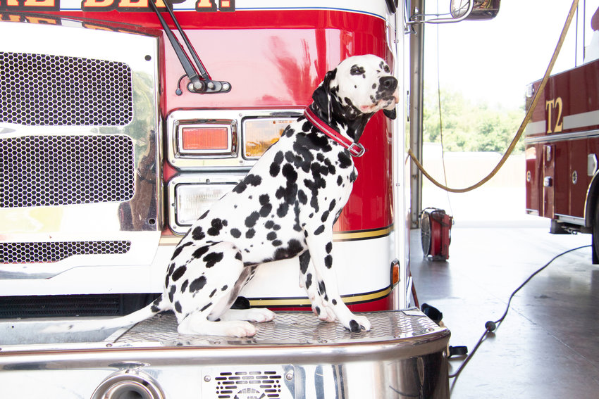 Sadi is owned by Cory Rettke from the Sedalia Fire Department.