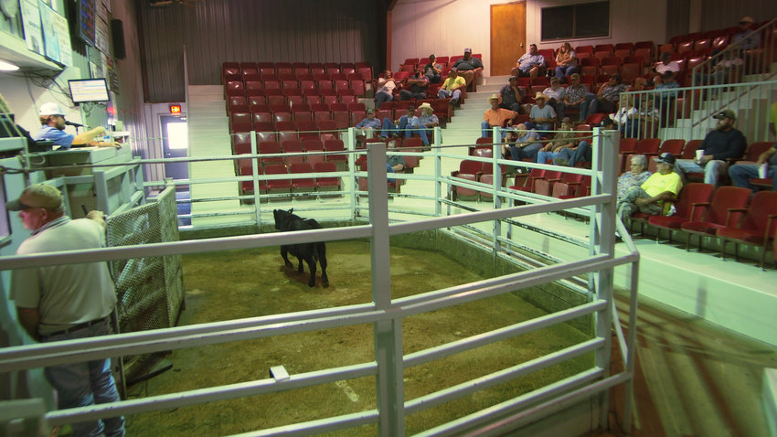 The Central Sales closure Monday leaves many ranchers wondering where they will buy and sell their cattle.