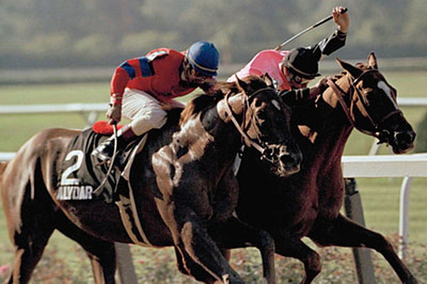 Alydar running neck and neck with his rival, Affirm, at one of the 1978 Triple Crown races. In 1990, Alydar was euthanized at his home in Calumet Farm under suspicious circumstances surrounding the financial collapse of its owner.