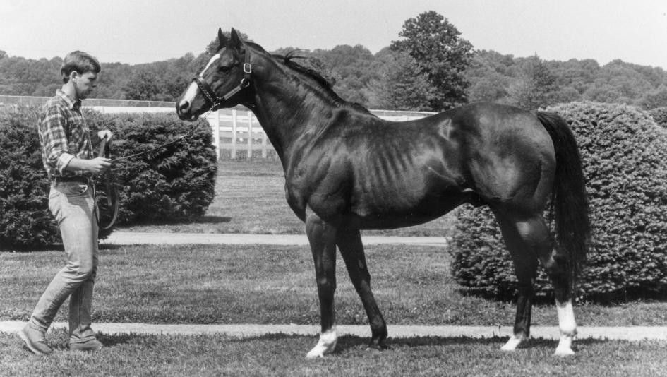 Northern Dancer, winner of the 1964 Kentucky Derby and Preakness Stakes and the greatest sire of the 20th century.