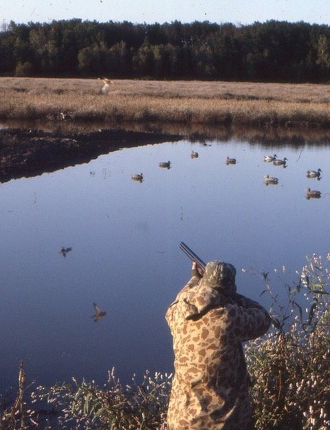 September teal hunter and green-winged teal right, blue-winged teal left.