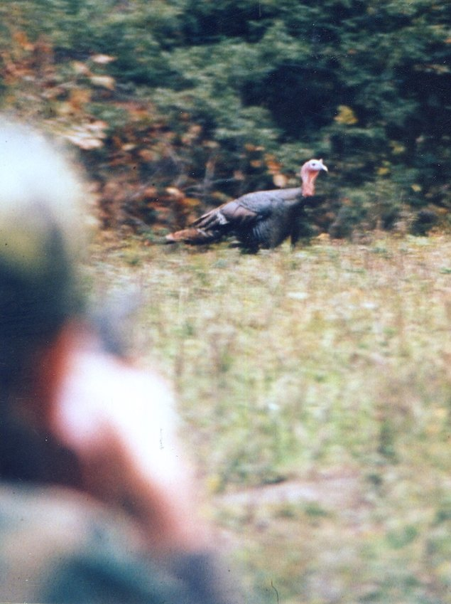 The future of turkey hunting may depend on cutting down the harvest of spring gobblers, and that can't be done without costing game and fish agencies money.  Some way will have to be found to do that so that money remains in those agencies or it will never happen.
