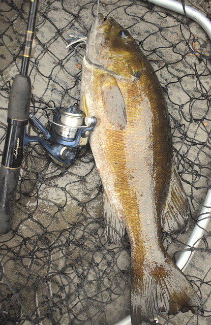 HE WASN'T AS BIG AS THE ONE LAST AUGUST, BUT HE FOUGHT HARDER, THIS GOLDEN COLORED BATTLER.